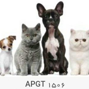 پوستر دیواری حیوانات